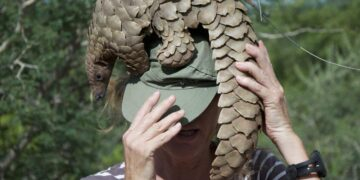 pangolin and covid